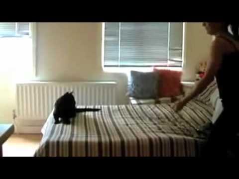 Lustige Katzen Videos zum totlachen 2